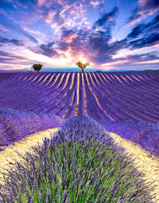 Plateau De Valensole - destinations, romantic, places, world